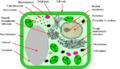 Plant cell.png